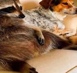 11 animais com crise de identidade