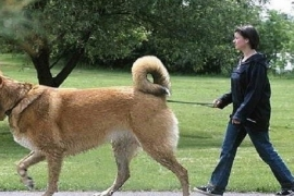 Cães exageradamente grandes