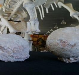 Ovos de dinossauros encontrados em Minas Gerais