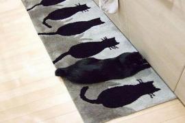 10 gatos que sabem se camuflar