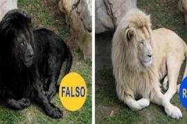 Imagens falsas que viralizaram na internet em 2015