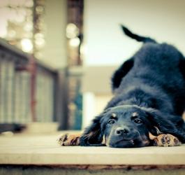 O que seu cachorro está querendo dizer?