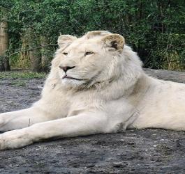 Belos animais albinos que você não pode deixar de conhecer