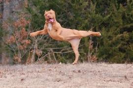 15 cães flagrados em situações muito engraçadas