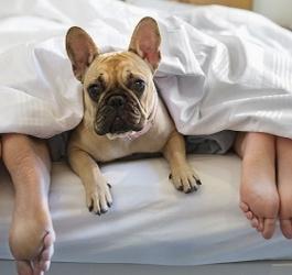 Seu animal de estimação pode te ajudar a melhorar o sono