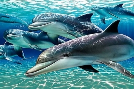 Porquê o mundo animal é mais extraordinário do que você pensa