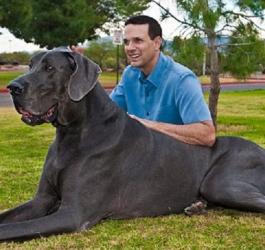 8 maiores raças de cães do mundo