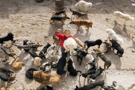 Milionário gasta toda fortuna para salvar cães na China
