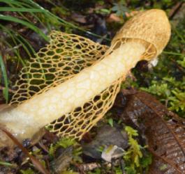 Conheça o incrível cogumelo que provoca orgasmos imediatos
