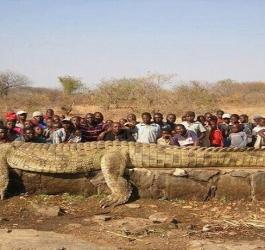 Animais gigantescos demais para suas espécies