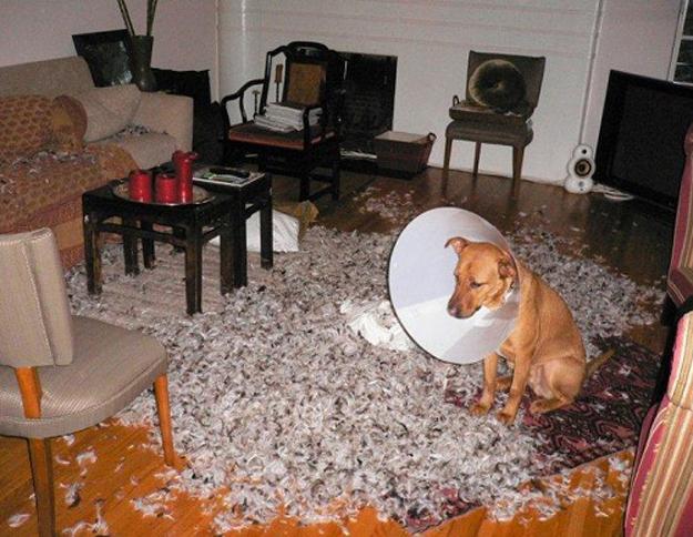 animais de estimação destruindo a casa