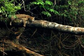 E se a Floresta Amazônica fosse destruída, o que aconteceria com a Terra?