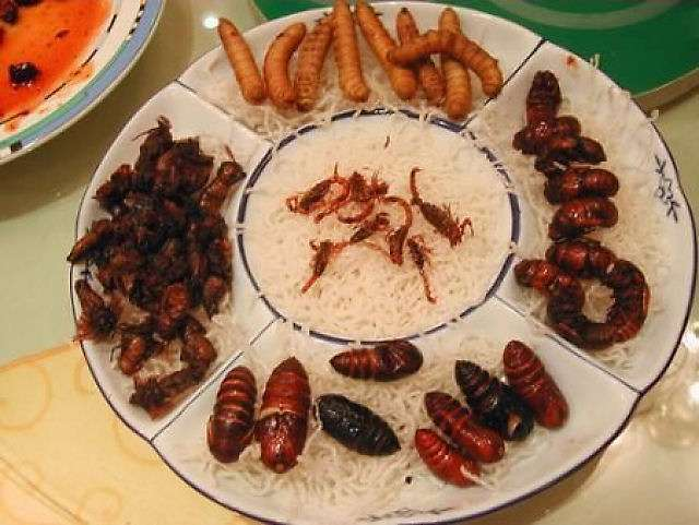 insetos 2