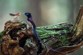 Imagens incríveis da natureza cuidando dela mesma