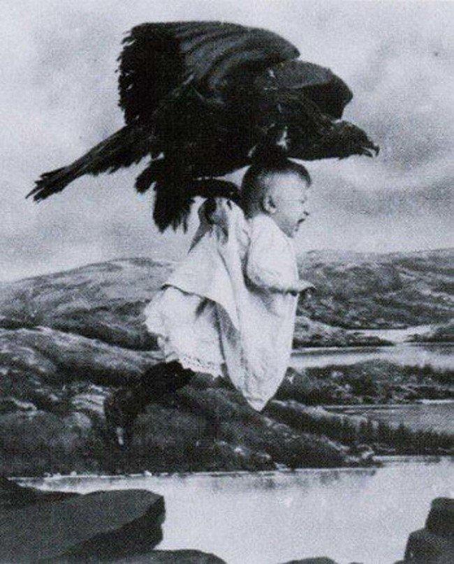 resgatado de um ninho de águia