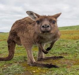 5 fatos surpreendentes sobre os animais