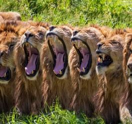 Por que bocejar é tão contagioso?