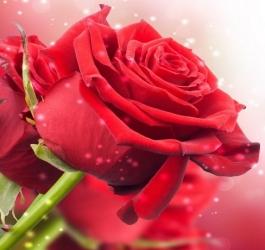 As 10 flores mais belas do mundo
