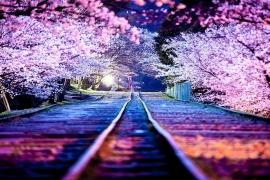 10 imagens que mostram o Japão como você nunca viu