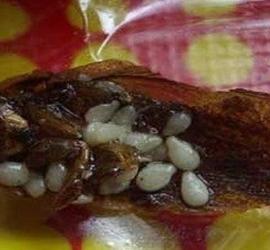 7 das coisas mais nojentas já encontradas em comidas