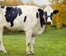 12 animais gigantes que não deveriam ser maiores que você