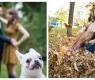 10 cães insolentes que dominaram a cena e arruinaram a foto