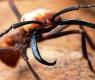 5 fatos que provam que as formigas são um inseto do capeta!