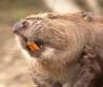 7 animais que têm cheiro de comida